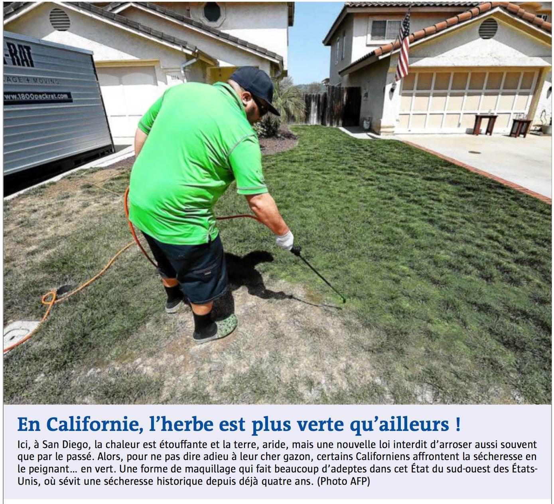 en-californie-lherbe-est-plus-verte-quailleurs.JPG